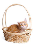 Frightened little kitten in straw basket. — Stock Photo
