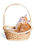 Small kitten in straw basket. — Zdjęcie stockowe