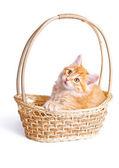 Liten kattunge i halm korg — Stockfoto
