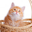Stock Photo: Small kitten in straw basket.