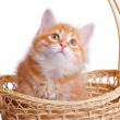 Small kitten in straw basket. — Stock Photo