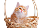 Small kitten in straw basket. — Stockfoto