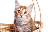 Small kitten in straw basket — Стоковое фото