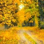 Autumn alley — Stock Photo #18578173