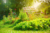 Flower garden — Stock Photo