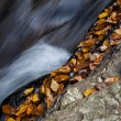 Autumn forest rocks creek in the yellow trees foliage woods — Stock Photo