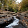 Autumn forest rocks creek in the yellow trees foliage woods — Stock Photo #13857332