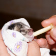 Feeding of a kitten — Stock Photo