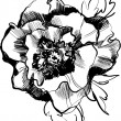 Vector de stock : Sketch of beautiful blooming peony flower