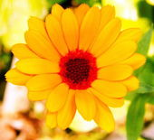 Bahçede çiçek açan bir gül resmi — Stok fotoğraf