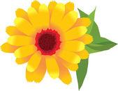 1 image of garden plants flower calendula — Stock Photo