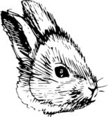 A image of a rabbit with long ears — Stock Vector