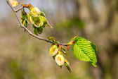 Image of a little tree in spring blossoming branches  — Stock Photo