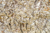 Preview interesting texture old tree bark  — Stock Photo