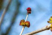 春の開花枝の少しの木の画像 — ストック写真
