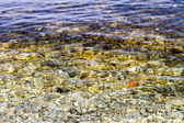 Preview of clear water near the shore with pebbles at the bottom — Stock Photo