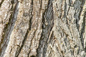 Closeup image of an old tree bark texture  — Stock Photo