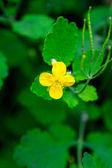 在绿色背景上的黄色的花 — 图库照片