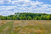 Landscape beautiful clouds over a large field near the forest — Stockfoto
