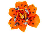 Tiger lily flower image made from wool — Stock Photo