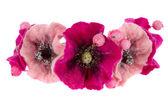 A beautiful flower Malva souvenir made of wool — Stock Photo