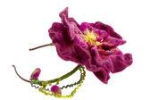 Decoración hermosa flor burdeos aro en la cabeza — Foto de Stock