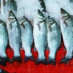 Fresh herring fish — Stock Photo #12407571