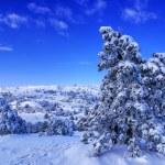 Winter landscape — Stock Photo #1152629