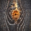 Stockfoto: Tree knot
