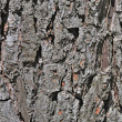 Old oak bark - Stock Photo