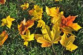 Autumn leaves — 图库照片