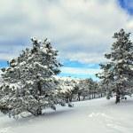 Winter landscape — Stock Photo #1608092