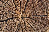 Trä skär — Stockfoto