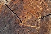 Holz schneiden — Stockfoto