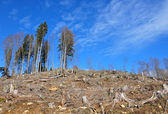 Clear cutting — Stock Photo
