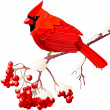 Red Cardinal bird — Vector de stock