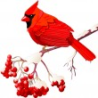 Stockvektor : Red Cardinal bird