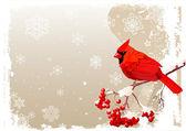Red Cardinal bird background — Stock Vector