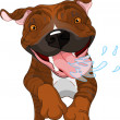 Excited brindle Pit Bull Dog - Stock Vector