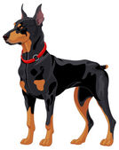Guard dog doberman — Vector de stock