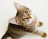 Funny striped kitten. — Stock Photo
