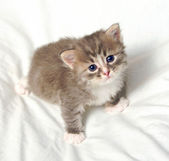 Small cute kitten. — Stock Photo