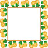 White frame of oranges — Stock Vector