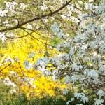 Blossom — Stock Photo #2721639