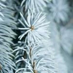Christmas background — Stock Photo #1297174