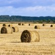 Stock Photo: Many haycocks in the field