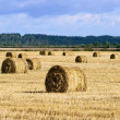 Many haycocks in the field — Stock Photo #13769536
