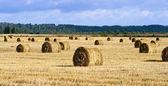 Beaucoup de haycocks dans le domaine — Photo