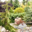 Coniferous garden with stones — Stock Photo