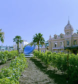 Grand Casino Monte - Carlo with vineyards on the foreground — Stock Photo